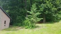 Na predaj  pekná chata na okraji lesa 250m od priehrady - Ružiná, okr. Lučenec – realitná kancelária Xemar